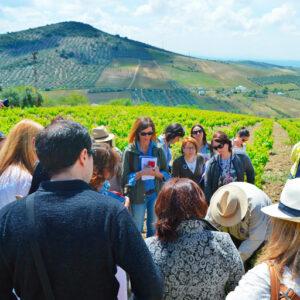 La Ruta del Vino Montilla-Moriles suma un nuevo incremento de visitantes con respecto al año anterior